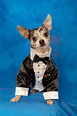DOG 05 MQ0067 01
