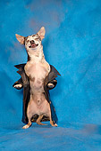 DOG 05 MQ0068 01