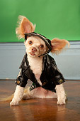 DOG 05 MQ0075 01