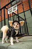 DOG 05 MQ0080 01