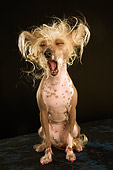 DOG 05 MQ0084 01