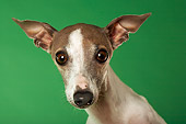 DOG 05 MQ0086 01