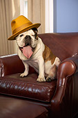 DOG 05 MQ0087 01