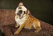 DOG 05 MQ0088 01