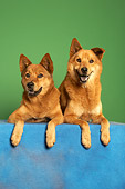 DOG 05 MQ0093 01