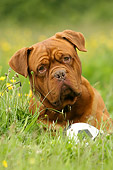 DOG 05 NR0002 01