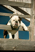 DOG 05 RC0006 01