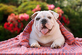 DOG 05 RC0007 01