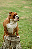 DOG 05 RC0009 01