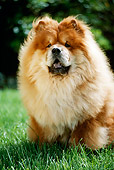 DOG 05 RC0010 01