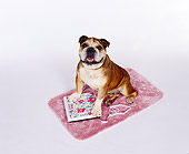 DOG 05 RK0002 03