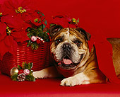 DOG 05 RK0019 11