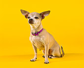 DOG 05 RK0031 13