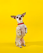 DOG 05 RK0034 07