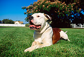 DOG 05 RK0052 01