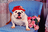 DOG 05 RK0068 09