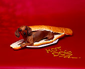 DOG 05 RK0080 05