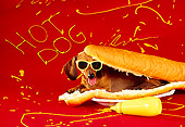 DOG 05 RK0084 05
