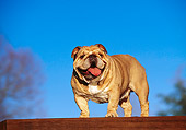 DOG 05 RK0108 06