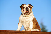 DOG 05 RK0122 01