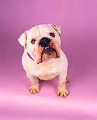 DOG 05 RK0186 04
