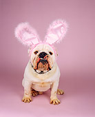 DOG 05 RK0191 04
