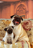 DOG 05 RK0196 06