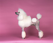 DOG 05 RK0216 02
