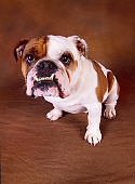 DOG 05 RK0226 07