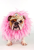DOG 05 RK0232 17