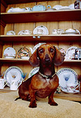 DOG 05 RK0242 07