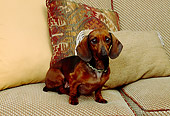 DOG 05 RK0245 01