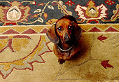 DOG 05 RK0246 01
