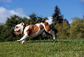 DOG 05 RK0264 03