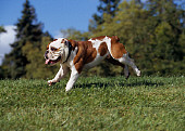 DOG 05 RK0264 04