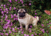 DOG 05 RK0266 04