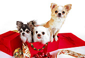 DOG 05 RK0283 03