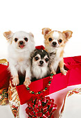 DOG 05 RK0284 10