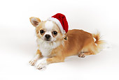 DOG 05 RK0285 02