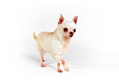 DOG 05 RK0290 06