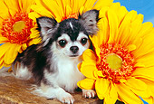 DOG 05 RK0294 11