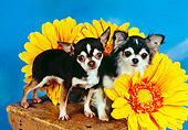 DOG 05 RK0298 07
