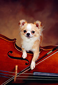 DOG 05 RK0304 06