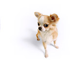 DOG 05 RK0306 01