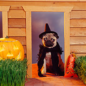DOG 05 RS0038 04