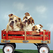 DOG 05 RS0055 04