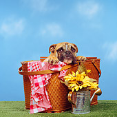 DOG 05 RS0058 01