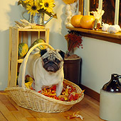DOG 05 RS0072 04