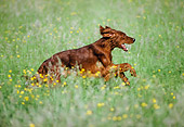 DOG 06 AB0003 01