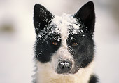 DOG 06 AB0004 01